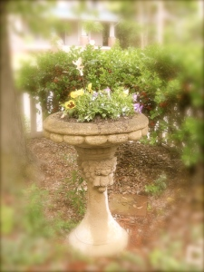 Pansies (Don't worry - we have two more birdbaths)